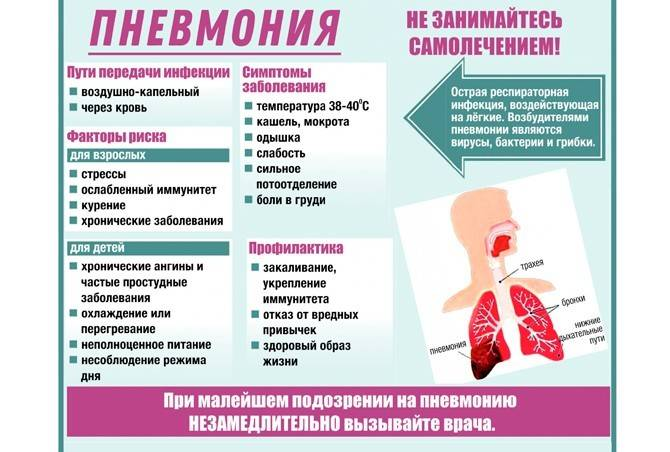 Воспаление легких у кота, симптомы и лечение пневмонии у кошек, последствия заболевания