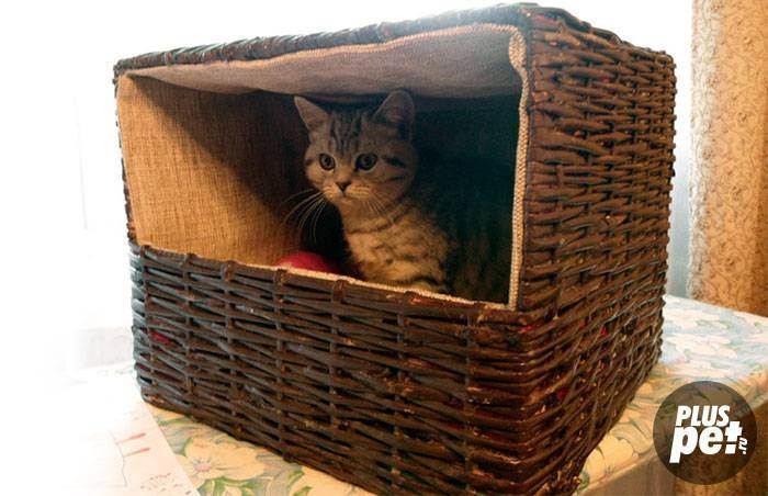 Роды у кошек, помошь при родах