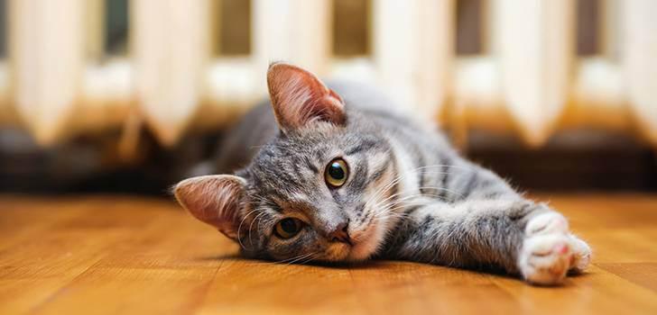 Куда деть любимого кота на время отъезда? - запись пользователя лена (lenka33) в сообществе домашние животные в категории помогите советом - babyblog.ru