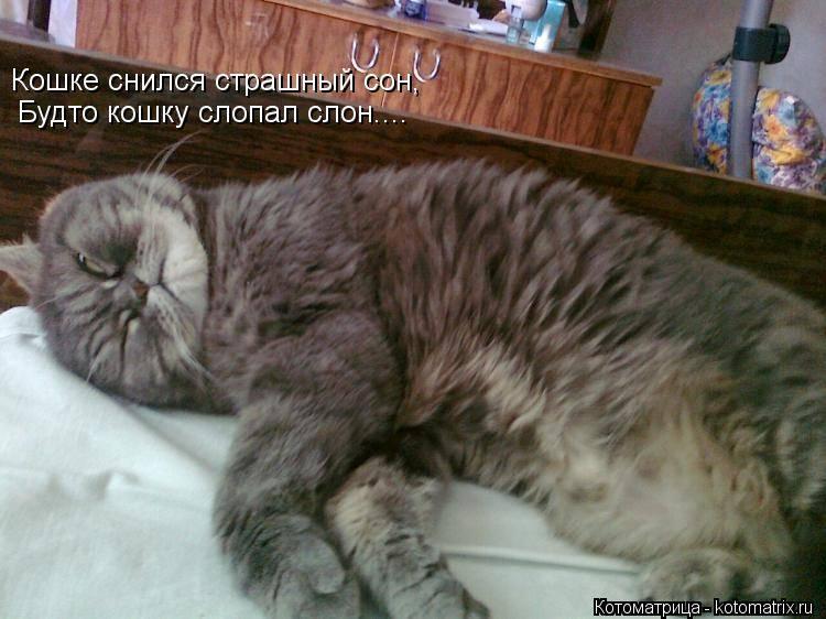Сонник коты много. к чему снится коты много видеть во сне - сонник дома солнца