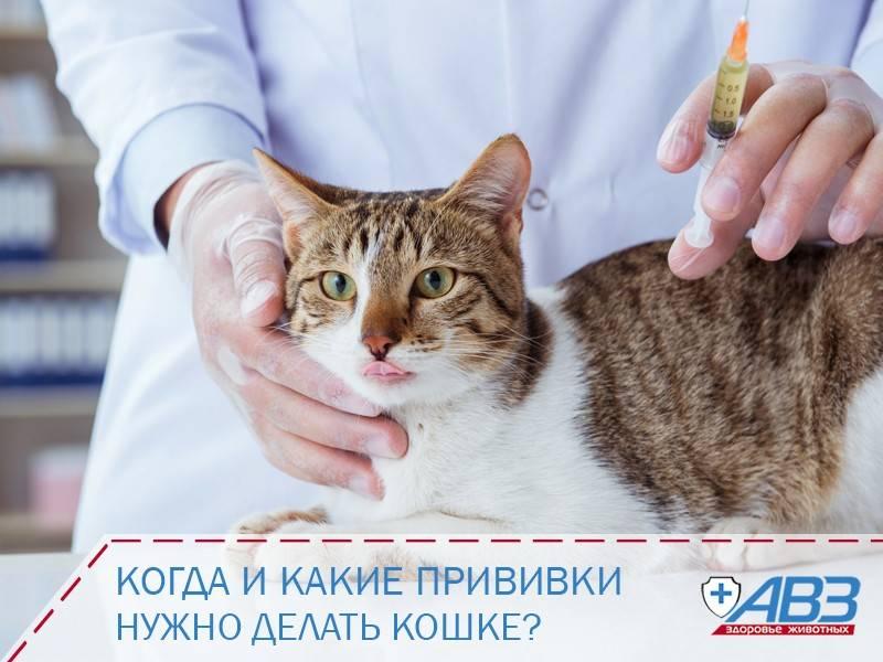 Поможет ли прививка котенка от чумки