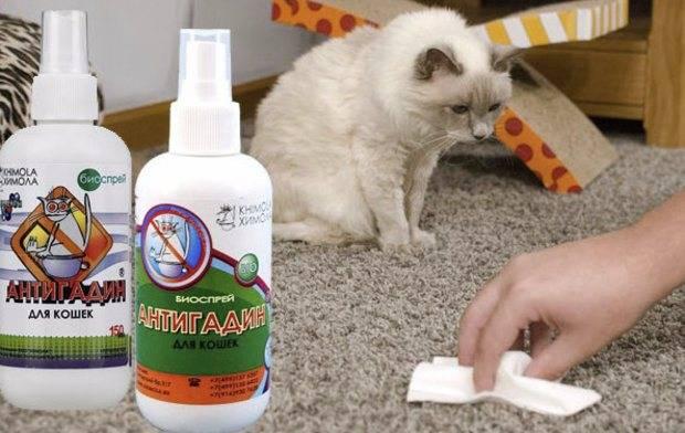 Антигадин для кошек: инструкция по применению, своими руками, цена, отзывы