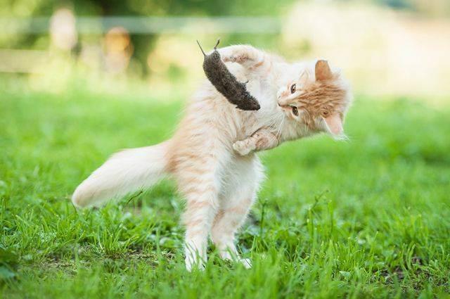 Как ест кошка: необычные пристрастия