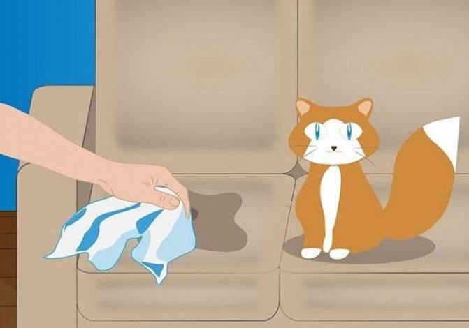 Почему кошка гадит на кровать хозяина