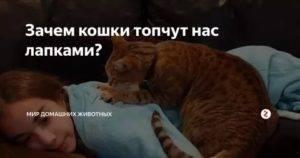 Почему кошки топчут нас лапками и мурчат