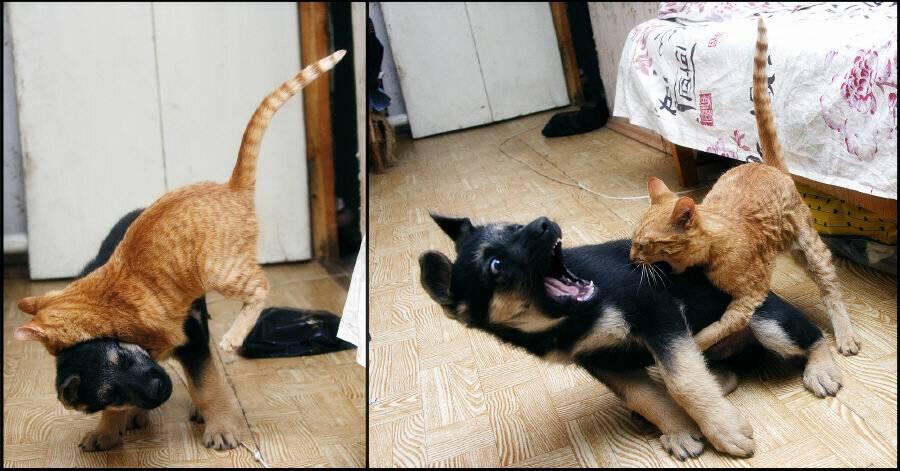Как успокоить агрессивного кота и понять причину его злости