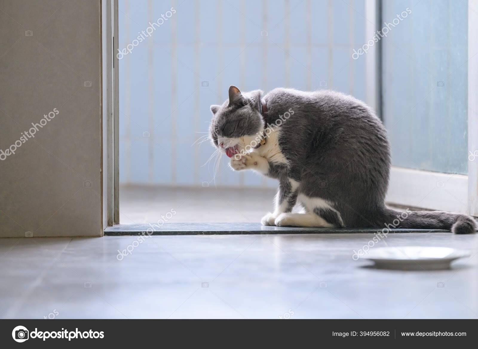 Причины почему кошки могут облизывать людей: их руки, ноги, лицо и другие примеры