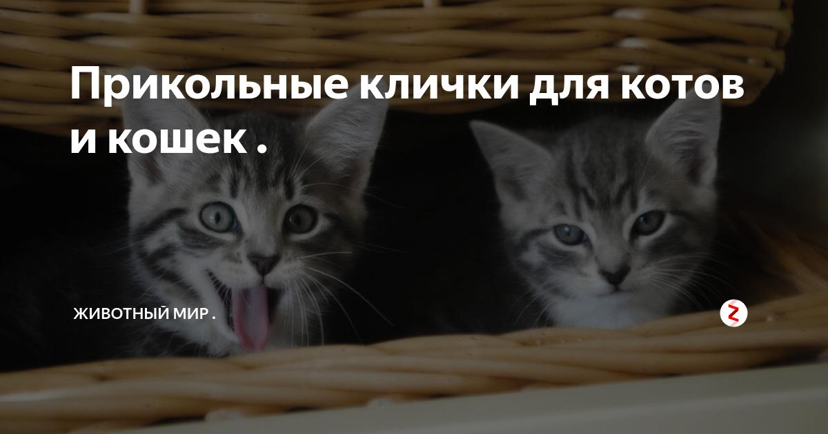 Выбираем кличку для кота или кошки: список красивых, легких, современных и необычных имен