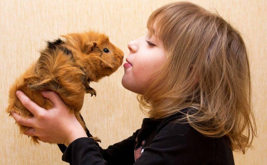 Топ 10 маленьких домашних животных для вашего ребенка :: инфониак