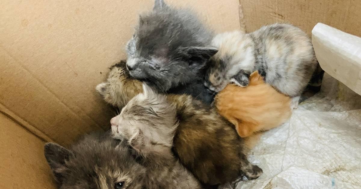 Когда котята начинают есть самостоятельно? | zdavnews.ru