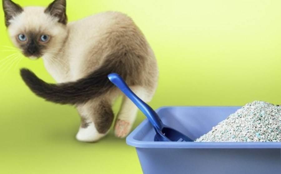 Котенок ест наполнитель для кошачьего туалета что делать