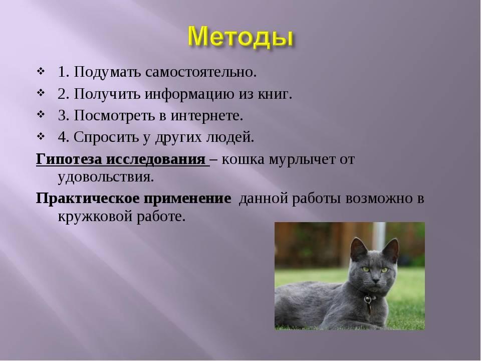 Причины урчания кота