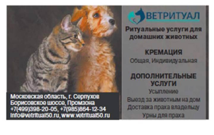 Как похоронить кошку: 12 шагов (с иллюстрациями)
