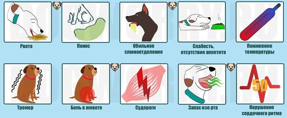 Отравление котёнка: что делать, симптомы и лечение, профилактика