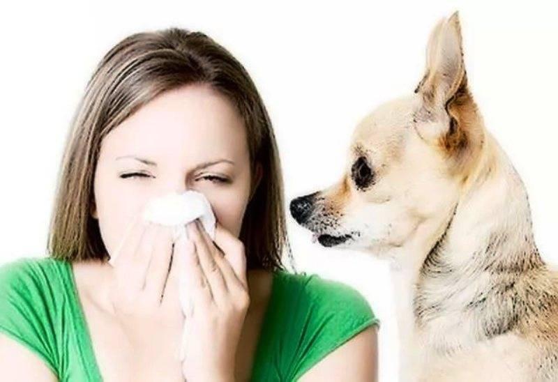 Аллергия на кошек: проявление, признаки у детей и взрослых, лечение