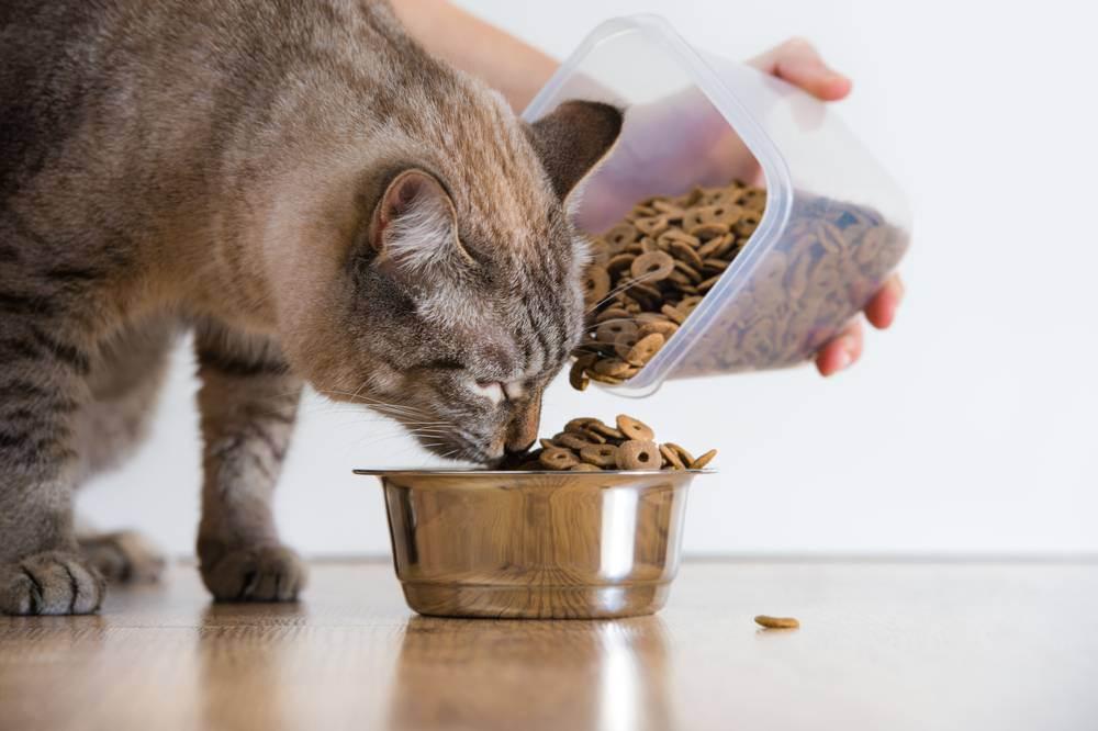 Как отучить кота или кошку от готового сухого и влажного корма и приучить к нормальной домашней еде?