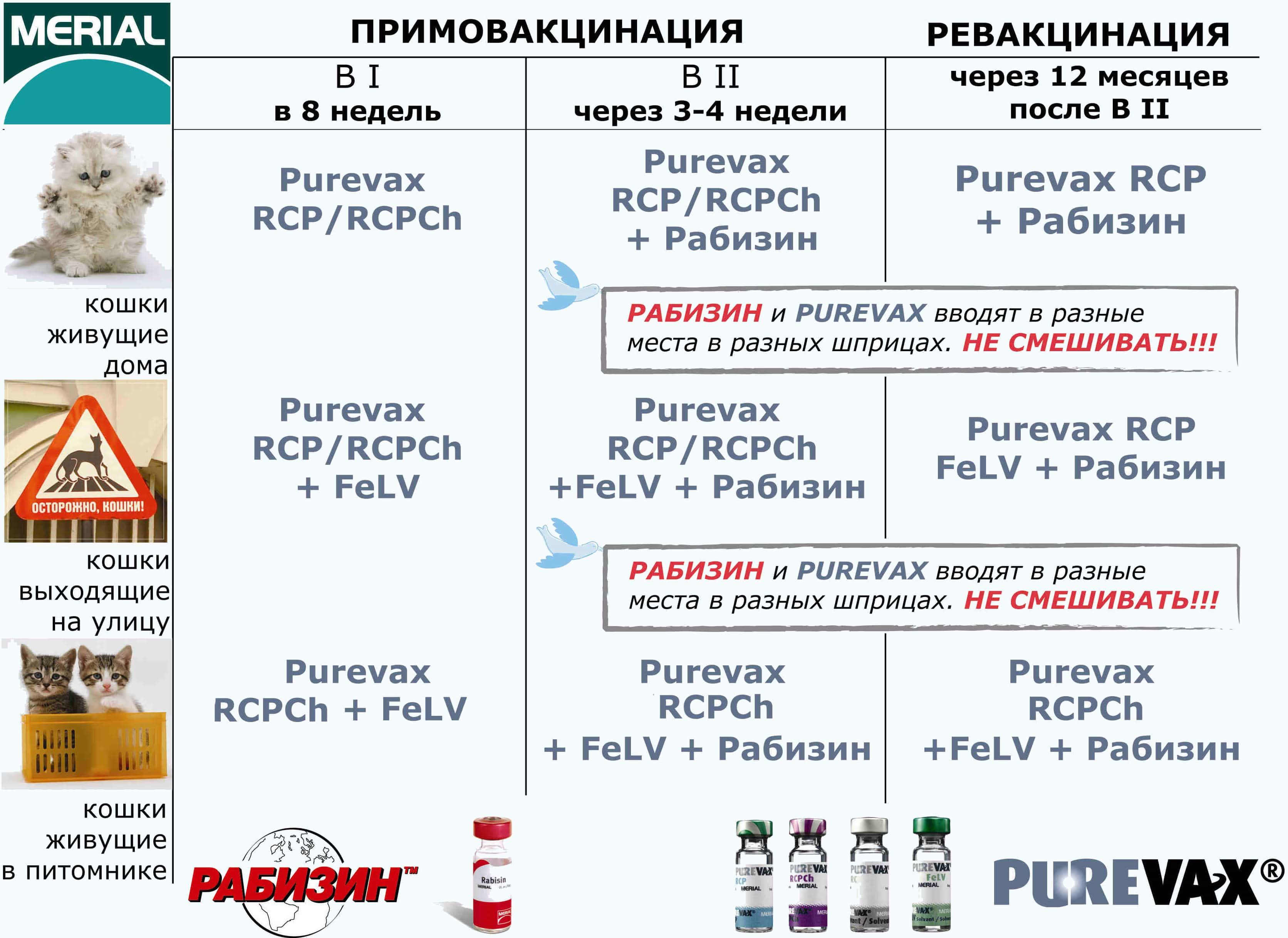 Свойства и применение вакцины пуревакс для кошек