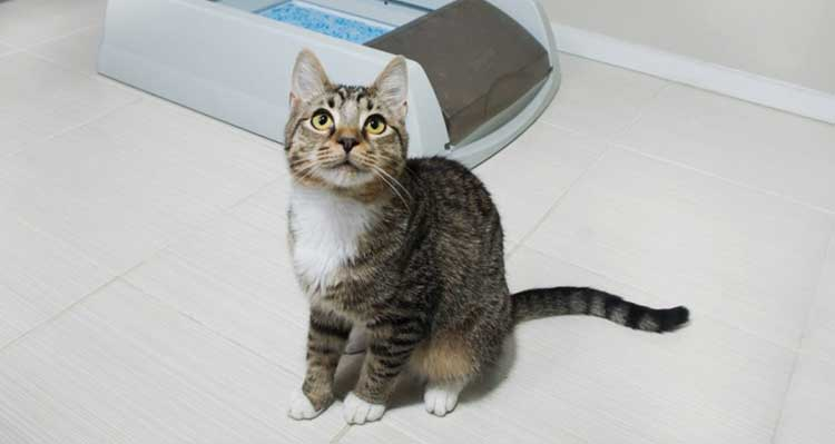 Почему кошка метит территорию во время течки и что с этим делать?