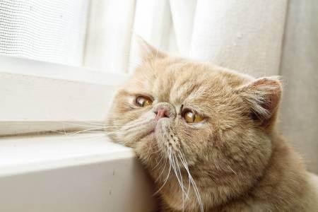 У кошки рвота белой пеной лечение ростов, кот блюет черным