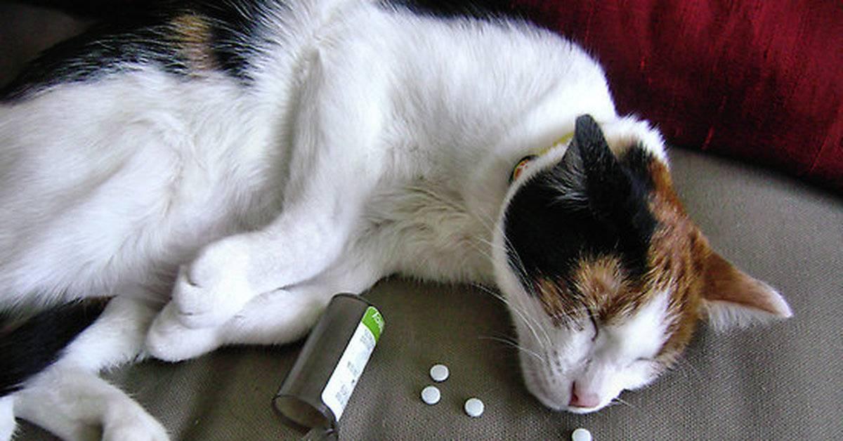 Что делать, если кошка не ест, пьет только воду и спит