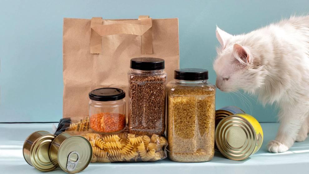 Чем лучше кормить кормящую кошку: сухими кормами или натуральным питанием?