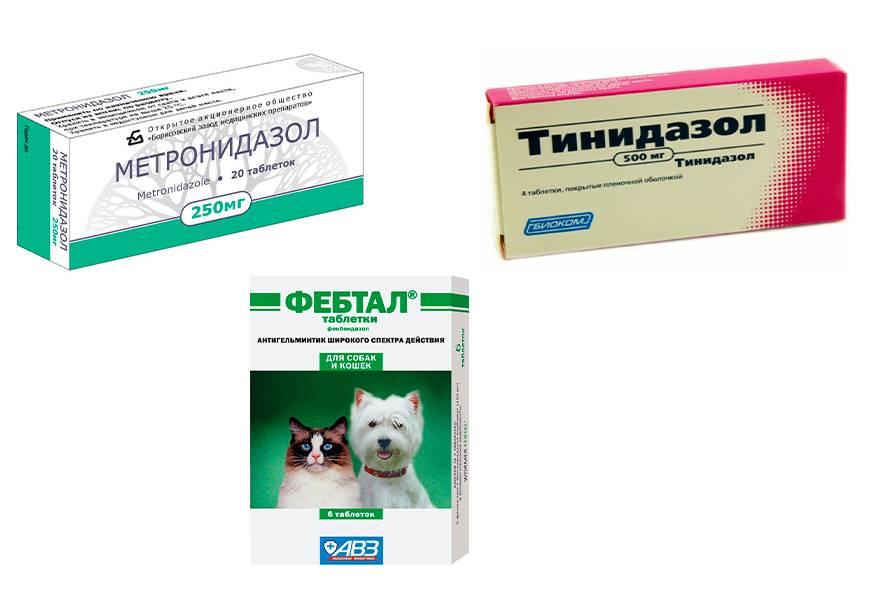 Препараты для лечения лямблиоза у кошек