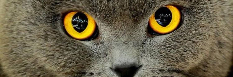 Смотреть кошке в глаза: почему нельзя и чем грозит