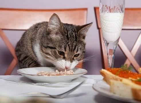 Как кормить котёнка сухим кормом: подбор рациона, приучение