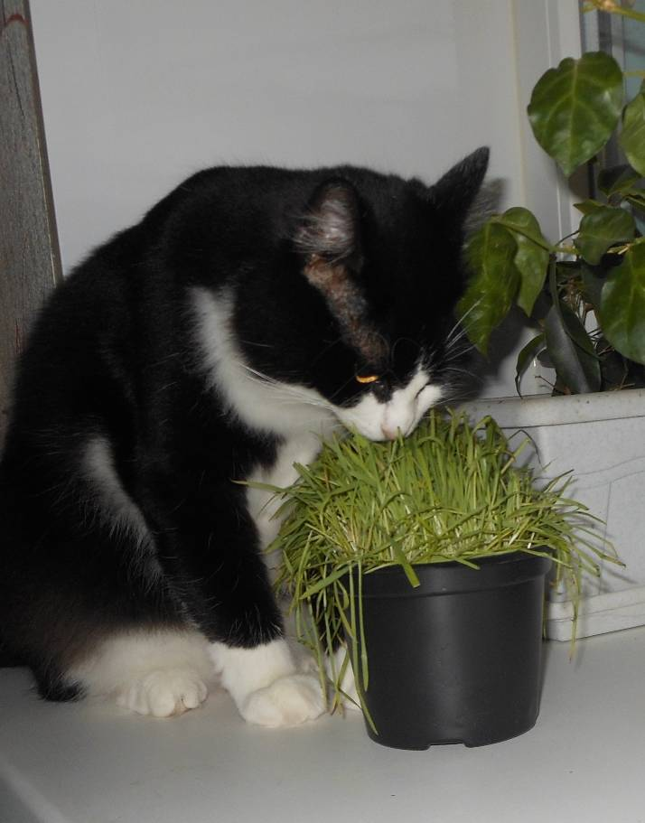 Какие основные запахи не любят кошки