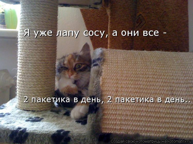 Почему кот сосет лапу