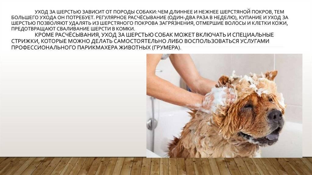 Вычесывание шерсти кошек