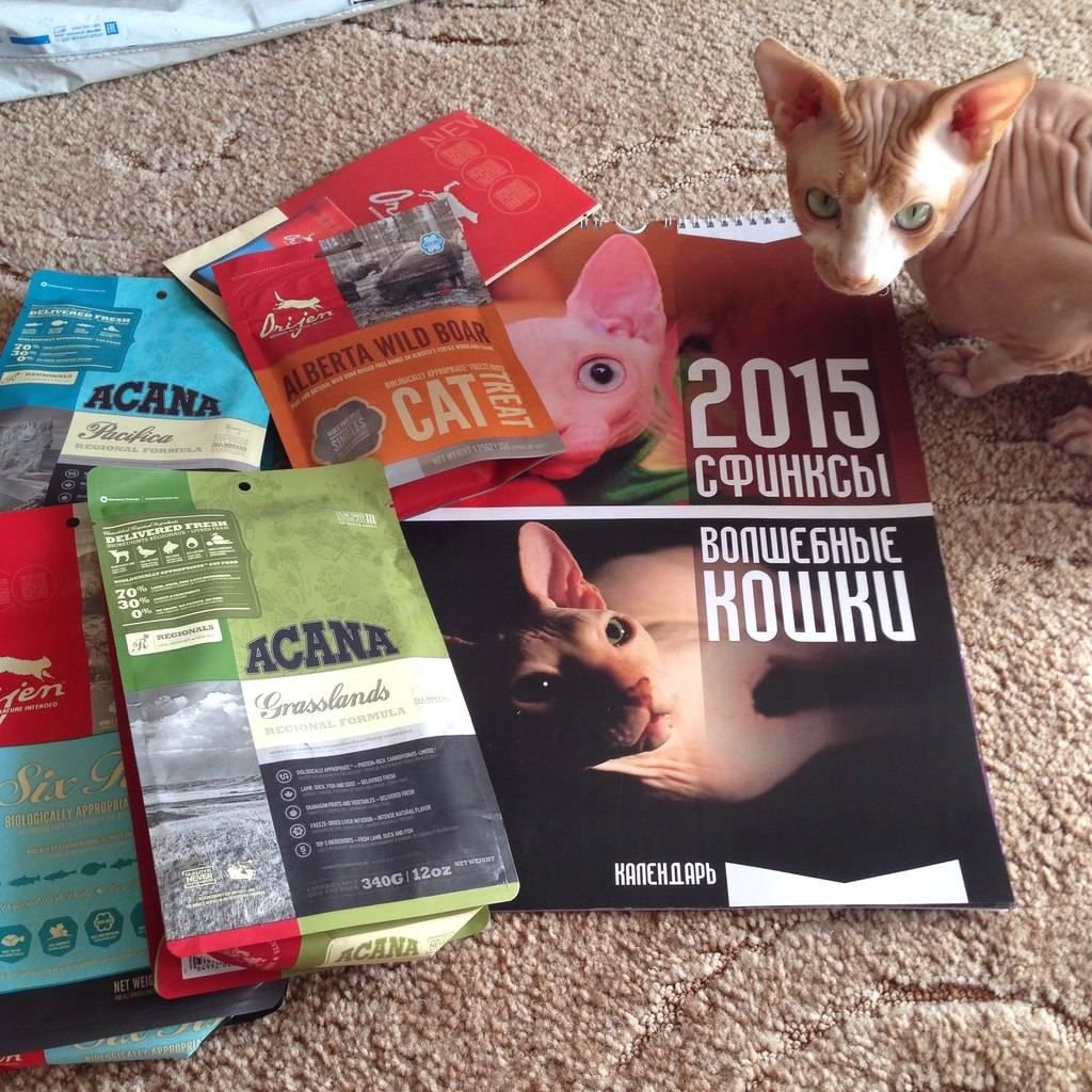 Чем кормить сфинкса взрослого и котенка?