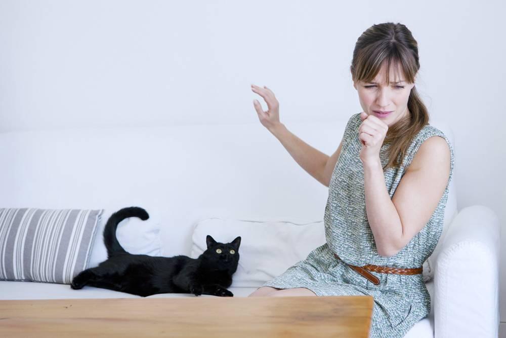 Аллергия на кошек - что делать и как избавиться