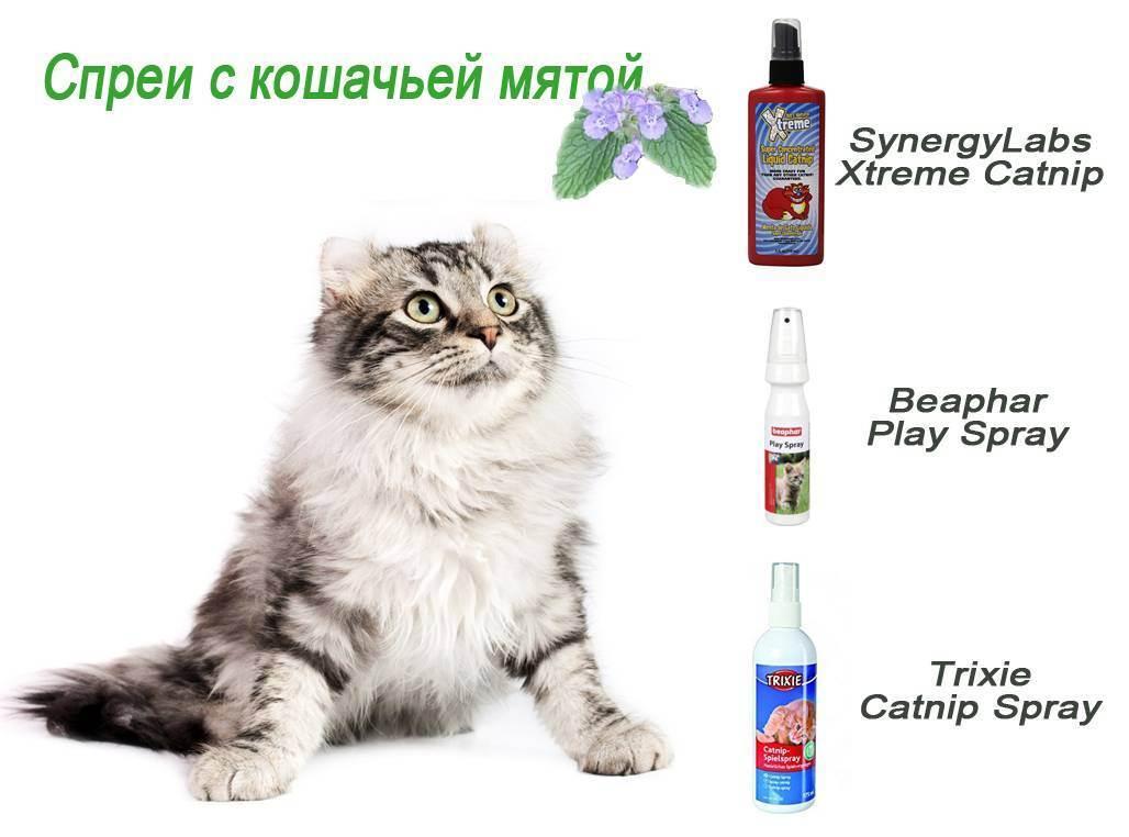 Кошачья мята: лечебные свойства, применение. как действует кошачья мята: вредна ли для котов огородная дурман-трава?