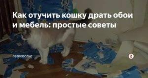Как отучить кота драть обои - проверенные способы как отучить кота драть обои - проверенные способы