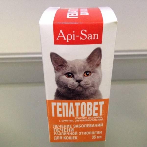 Гепатовет для кошек: инструкция по применению и состав, показания к применению и стоимость, аналоги для собак