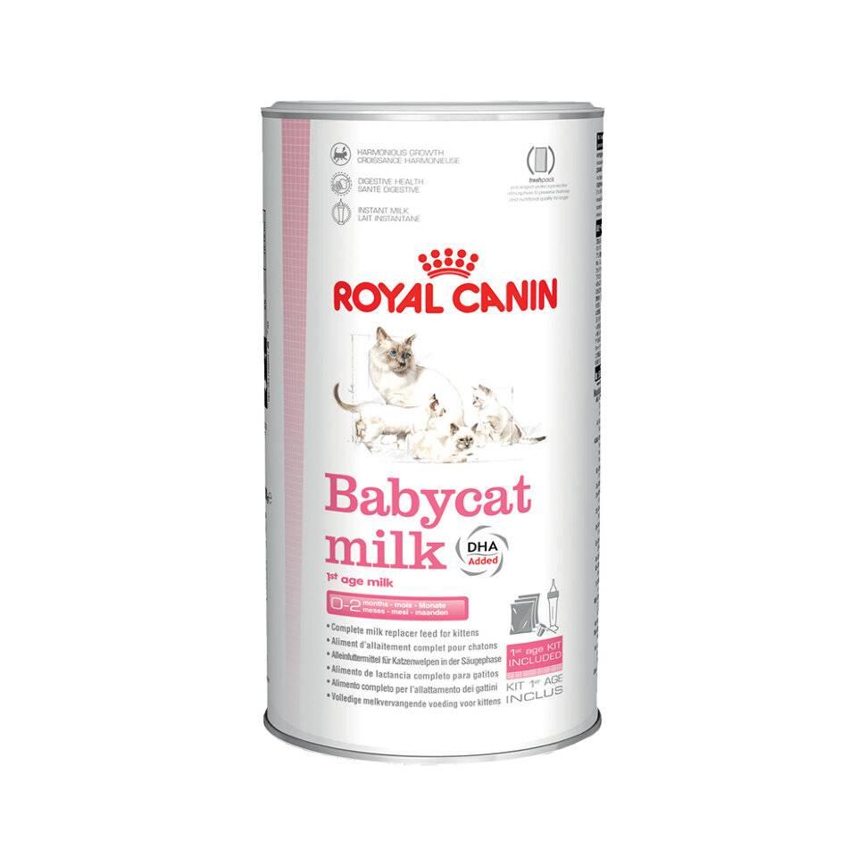 Какой корм для котят лучше: виды и классы кормов, плюсы и минусы натуральных продуктов