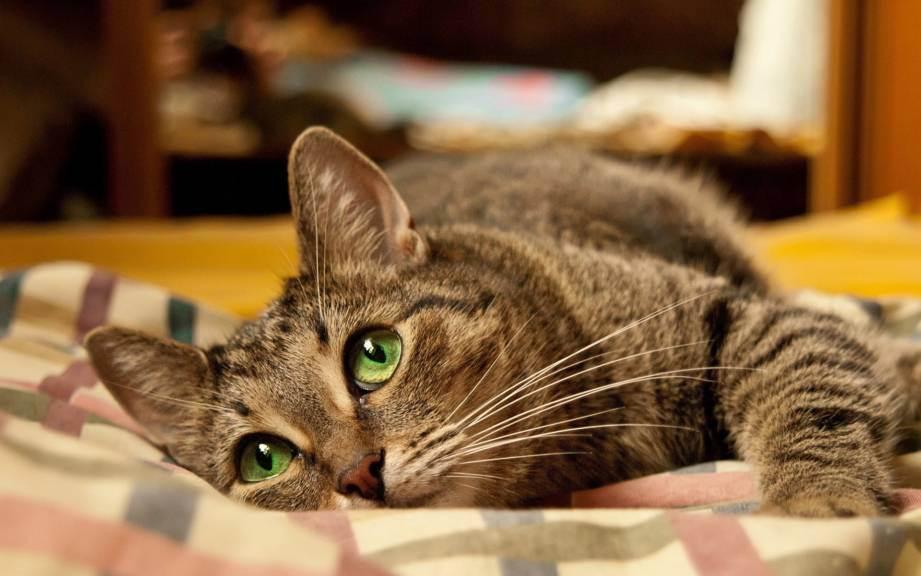 Обзор препаратов от глистов для кошек: таблетки, суспензии и капли на холку