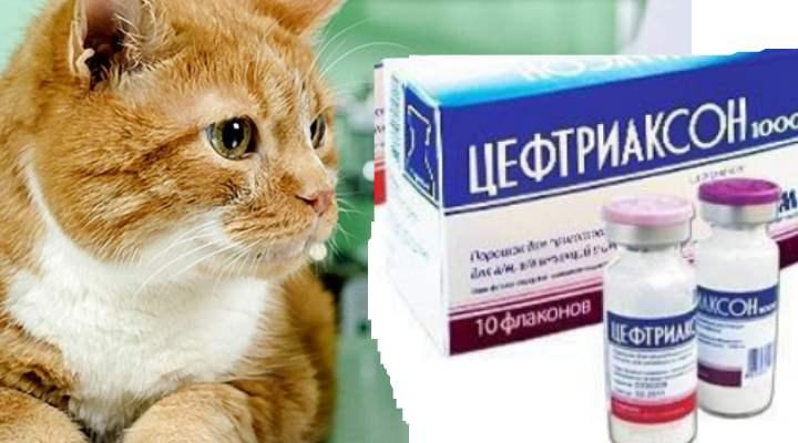 Мазь от лишая для кошек: обзор эффективных препаратов, техника нанесения