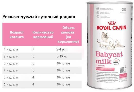 Чем кормить новорожденного котенка без кошки?
