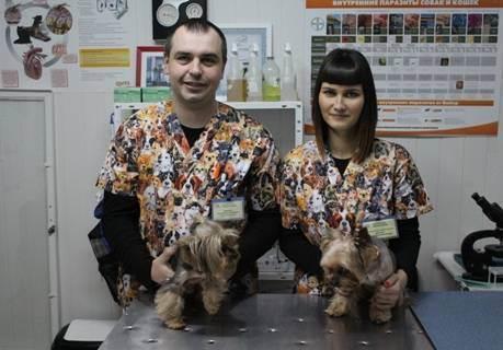 Ветеринар на дом: в каких ситуациях может потребоваться, практические рекомендации