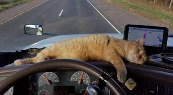 Отпуск с кошкой.