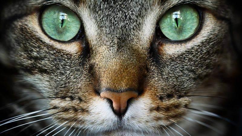 Как выражается аллергия на кошек у детей