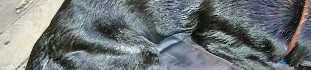 Перхоть у кошки - на спине около хвоста и в других местах, причины и лечение недуга