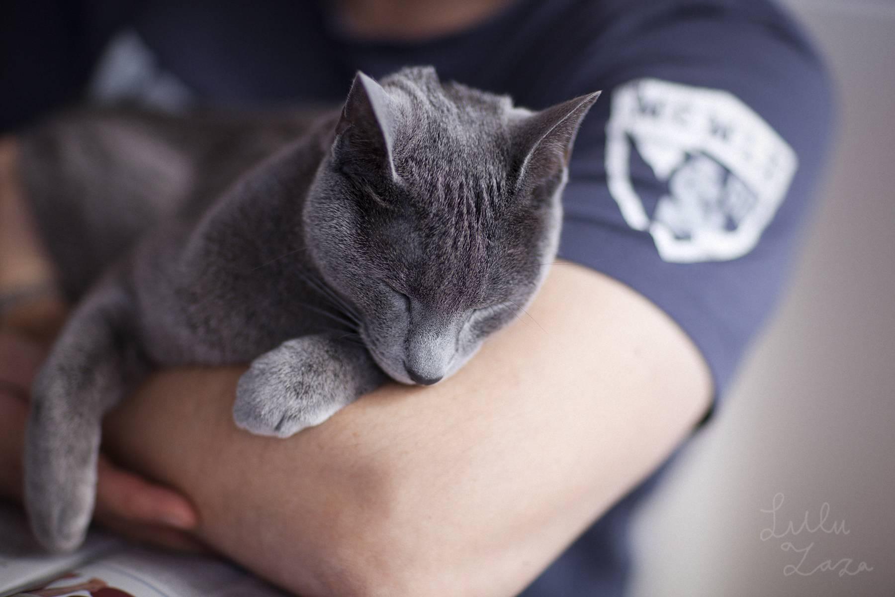 Что делать если кот не ласковый