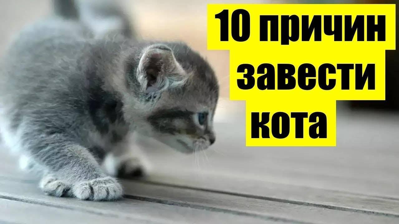 Почему люди заводят много кошек и собак, зачем человек содержит домашних животных, и почему людям особенно нравятся кошки?