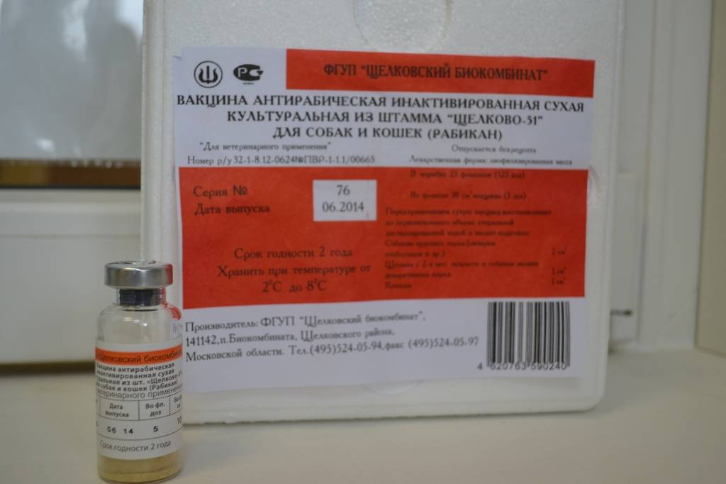 Вакцина рабифел для кошек