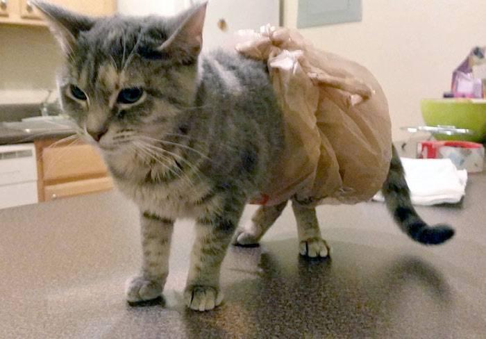 Рвота у кошки – причины, первая помощь, лечение