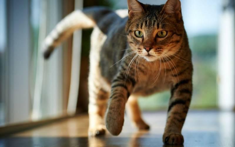 Как вывести запах кошачьей мочи из обуви, полностью убрать его