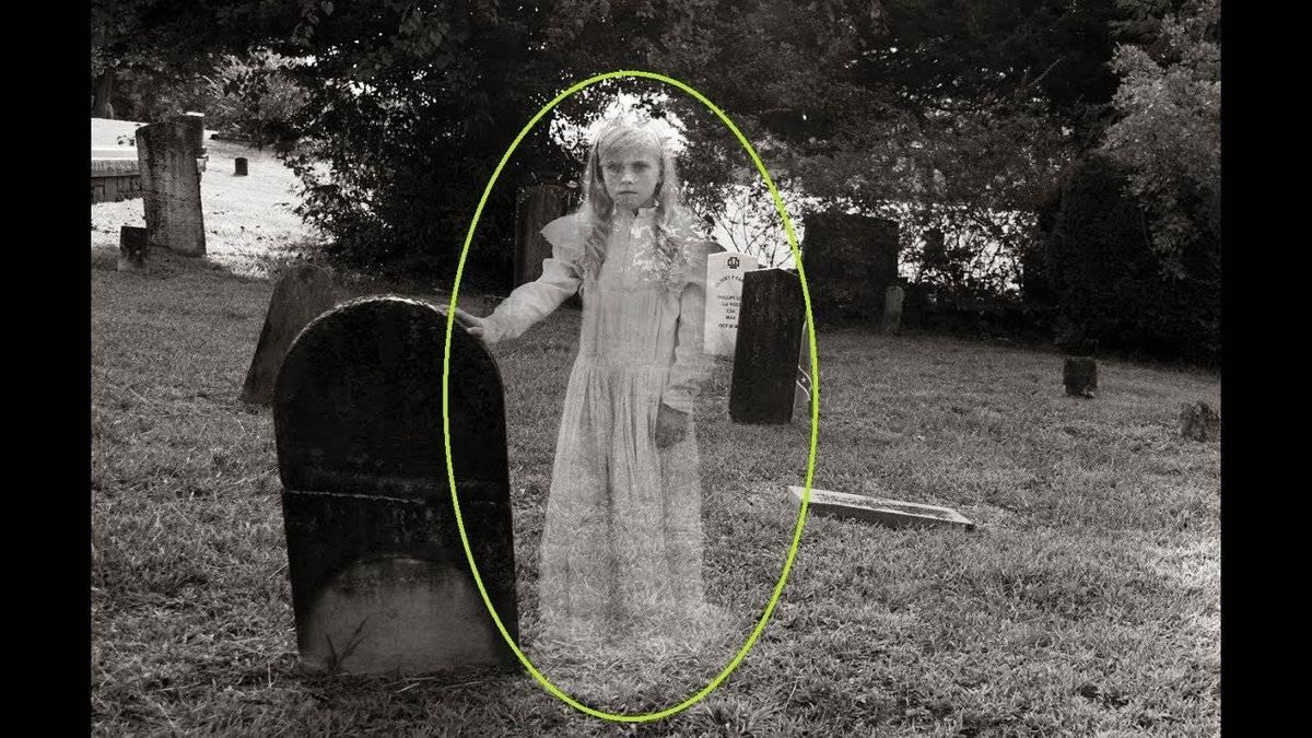 Кошки видят призраков — правда ли это?